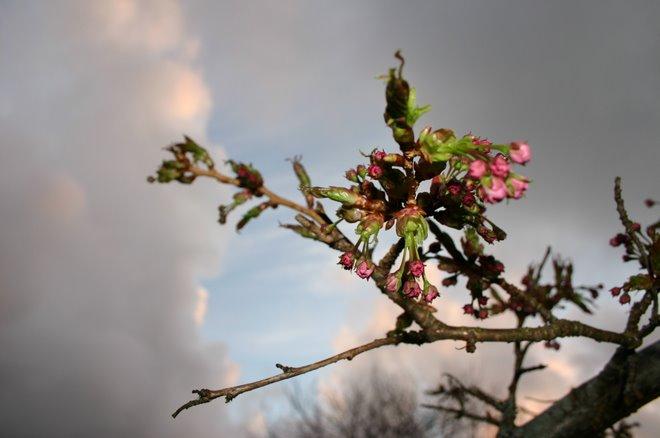 Blomster fra min hage