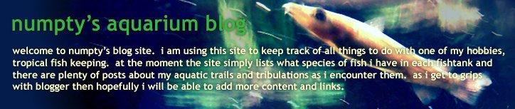 numpty's aquarium blog