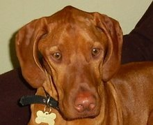Jasper with myositis. He died May 2007, aged 2