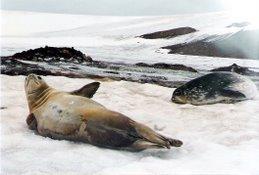O repouso das focas