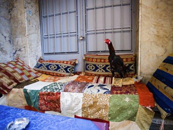 El gallo de Constantinopla