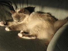 Sun Shine Pearl