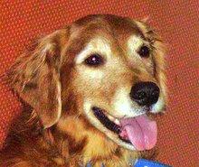 Sasha the Woof
