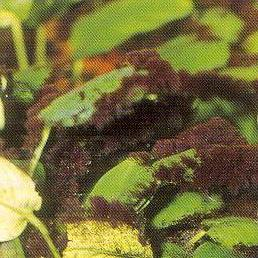 Aquaristik treff 03 dezember 2006 for Algen im aquarium