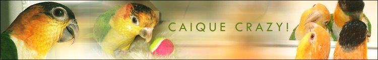 Caique Crazy Blog