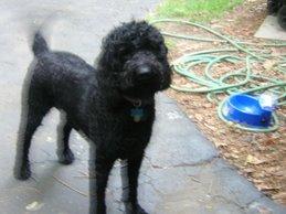 Annie-dog