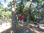 Up a tree (2)