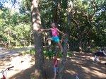 Up a tree (1)