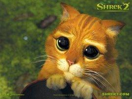el michifus de shrek!!!!!!!!