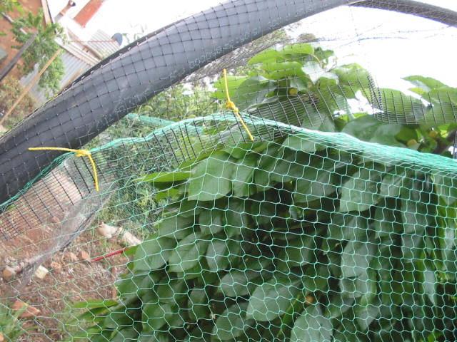 Scarecrow 39 S Garden Cherry Tree Net Frame