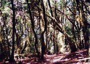 ¿un bosque