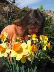 Valentines daffodils