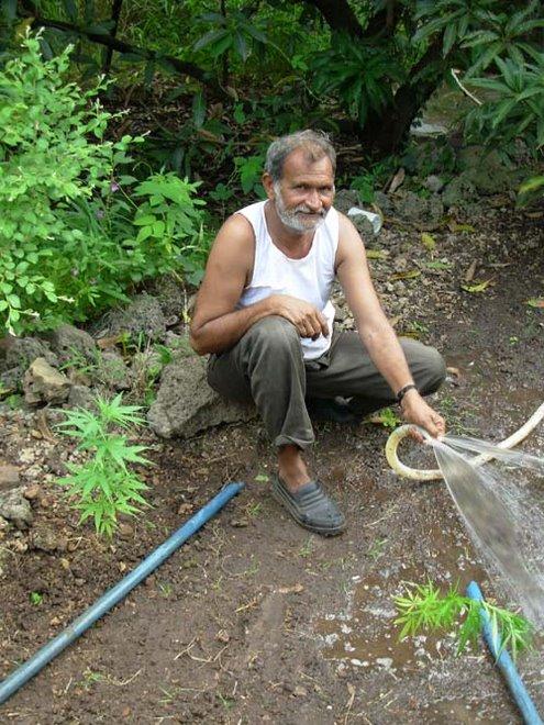 le jardinier du baba