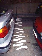 La zebra rules!!!!