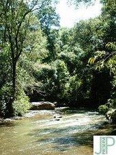 Córrego dos Macacos JP