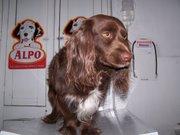 Rocky en la veterinaria