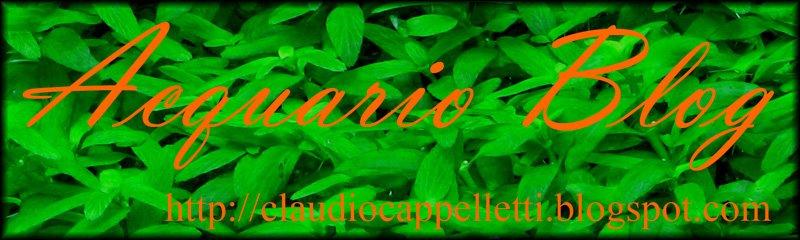 Acquario Blog