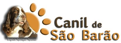 Canil de São Barão - English Springer Spaniel