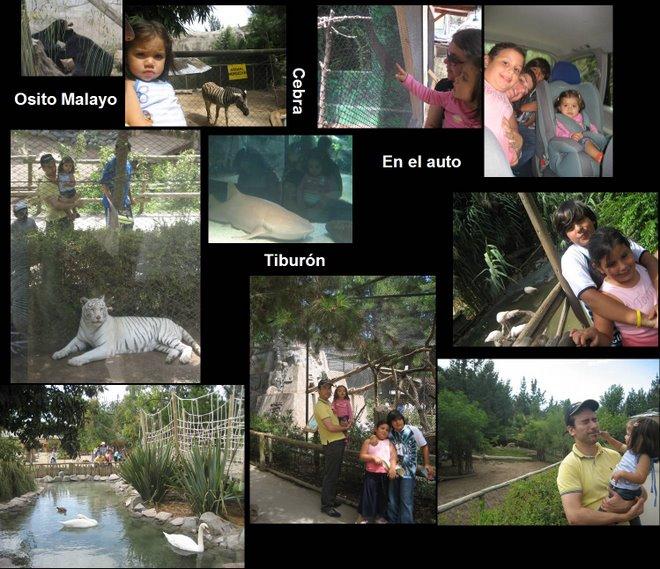 Imágenes de nuestro paseo al zoo
