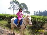 Riding Horse - Race