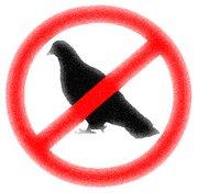 divieto di transito e di sosta ai piccioni