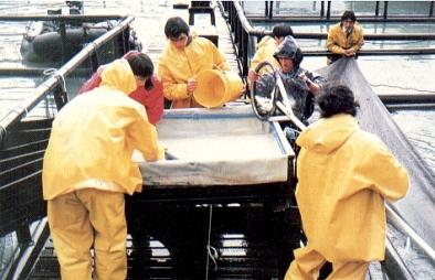 Clasificacion de Salmon en Chile