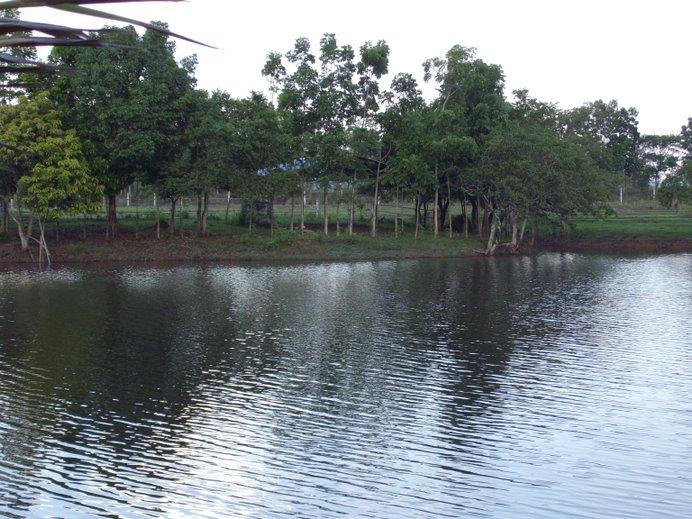 Ramos Pond, Macatbong, Cabanatuan City, Philippines