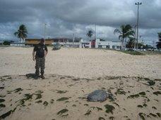 Inspetor Ubirajara Gomes analisa animal encontrado na orla de Piedade