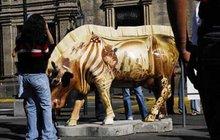 """""""Border conflict cow"""", de Miguel Pérez, es una de las vacas que ya fueron dañadas. Foto:Abraham Pér"""