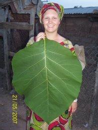 Me with a Teak Leaf