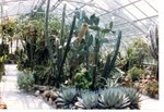 Krohn Conservatory Cactus House