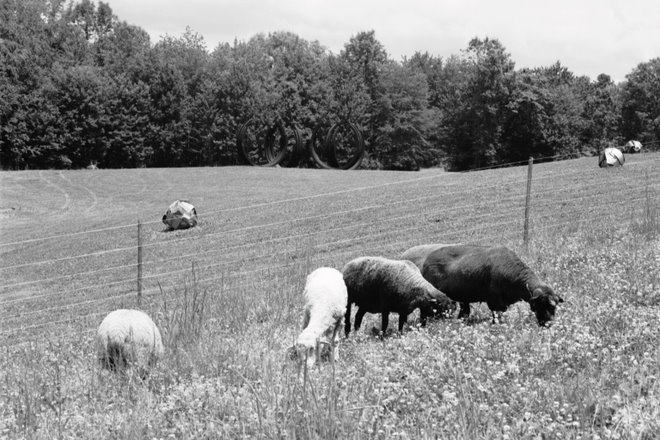 Sheep with fence and sculptures