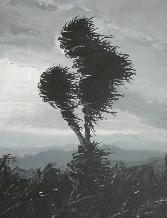 Hawhenua - Land wind
