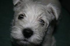 Puppy Pablo
