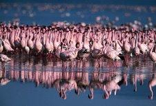 Lake Nakuru Park