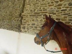Die Pferde: