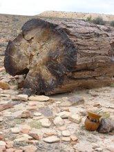 mate entre tronco i´ piedra en Santa Cruz, Patagonia Argentina
