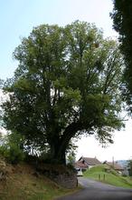 arbre sully