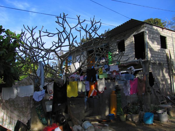 The colorful laundry tree