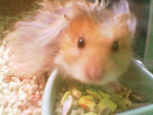 My Hamster [Name: Atrium]