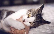 o gato do ermita