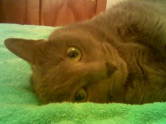 Creepy the Cat, now neglected but beloved pet of Mrs. Jarcy