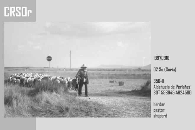 1997 Soria: herder - hond - schapen