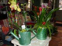 Regadera con planta natural