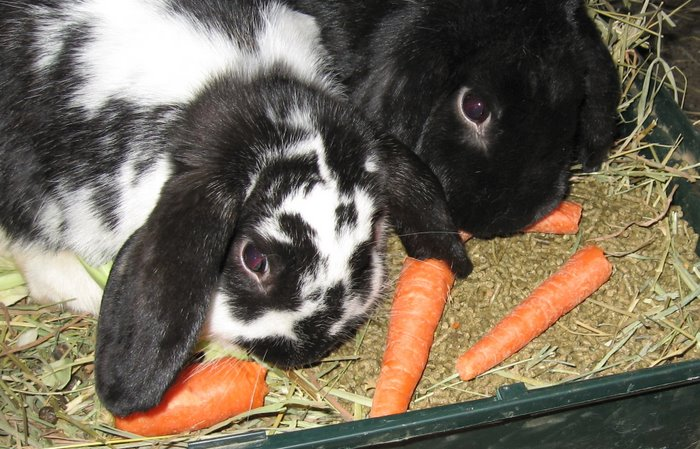 Carrots for Dolly and Blackberry