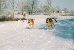 Doggies running at Jamestown