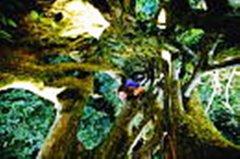 MFH in Costa Rica (1991)
