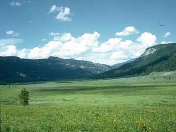 A beautiful picture of the wonderous grasslands!