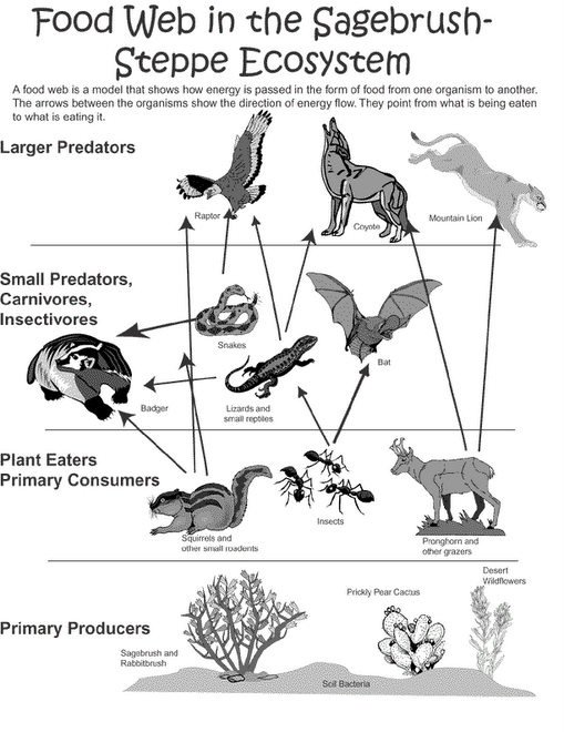 Grassland ecosystem food chain the for Food web coloring pages