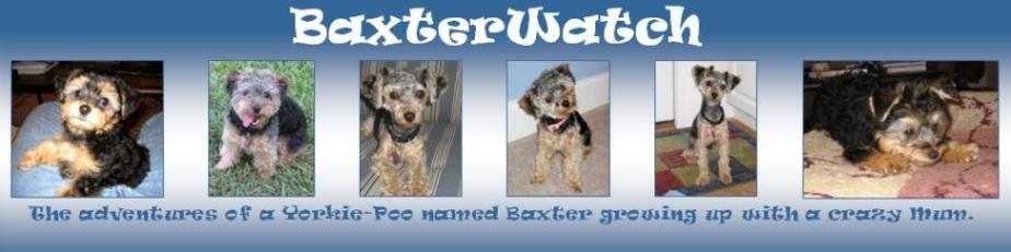 Baxter Watch